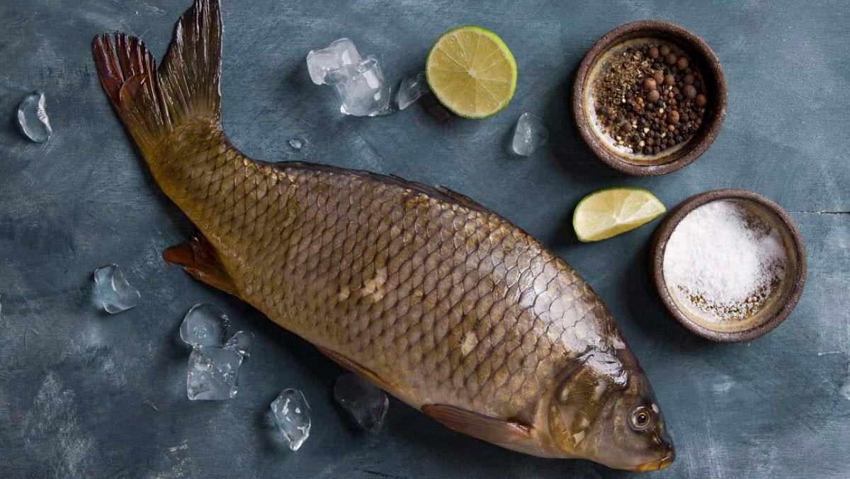 Cá chép giúp trẻ thông minh từ trong bụng mẹ