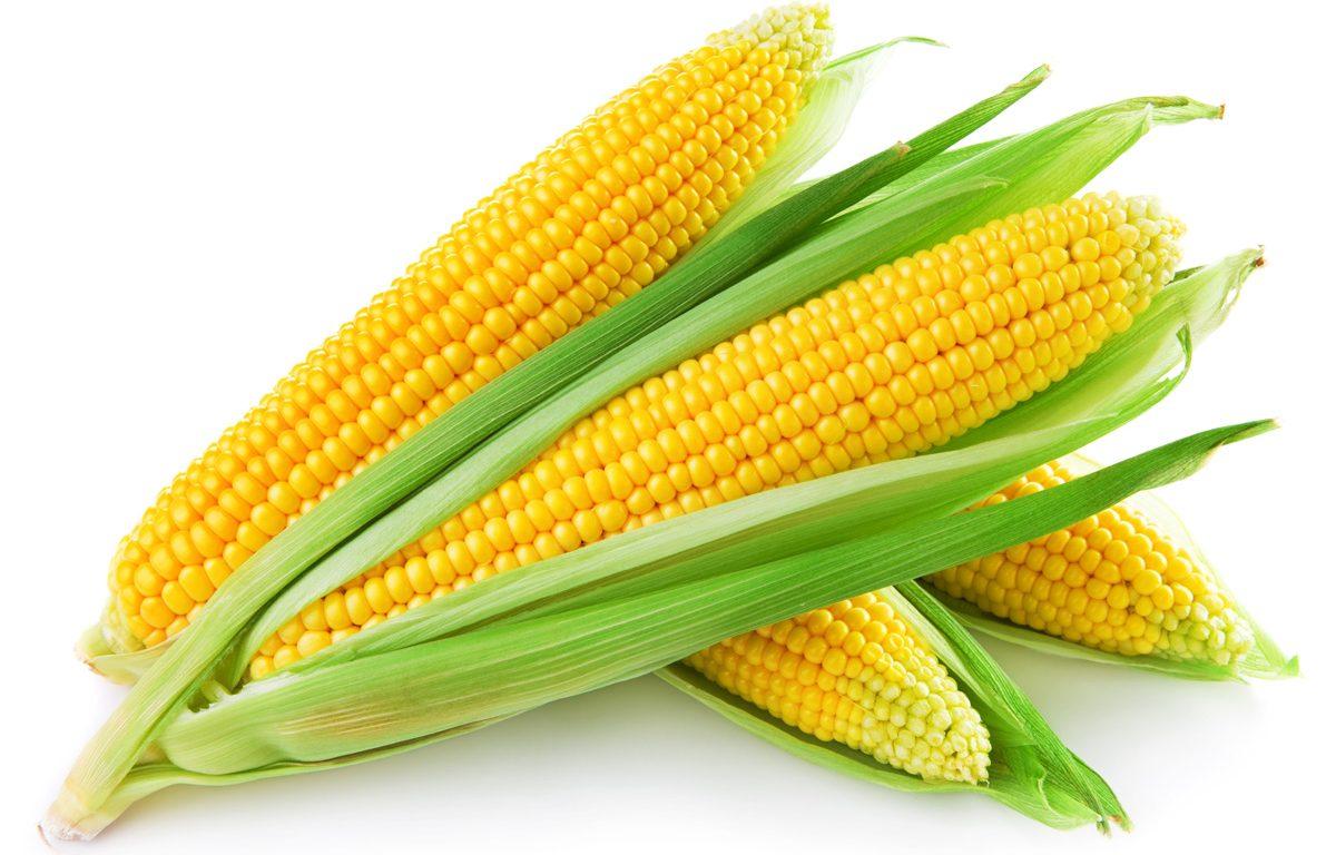 Thành phần dinh dưỡng của bắp