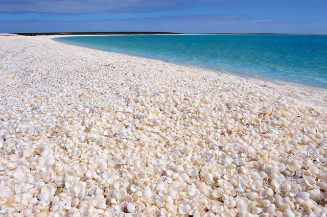 Bãi biển vỏ sò độc đáo nổi danh thế giới ở Australia