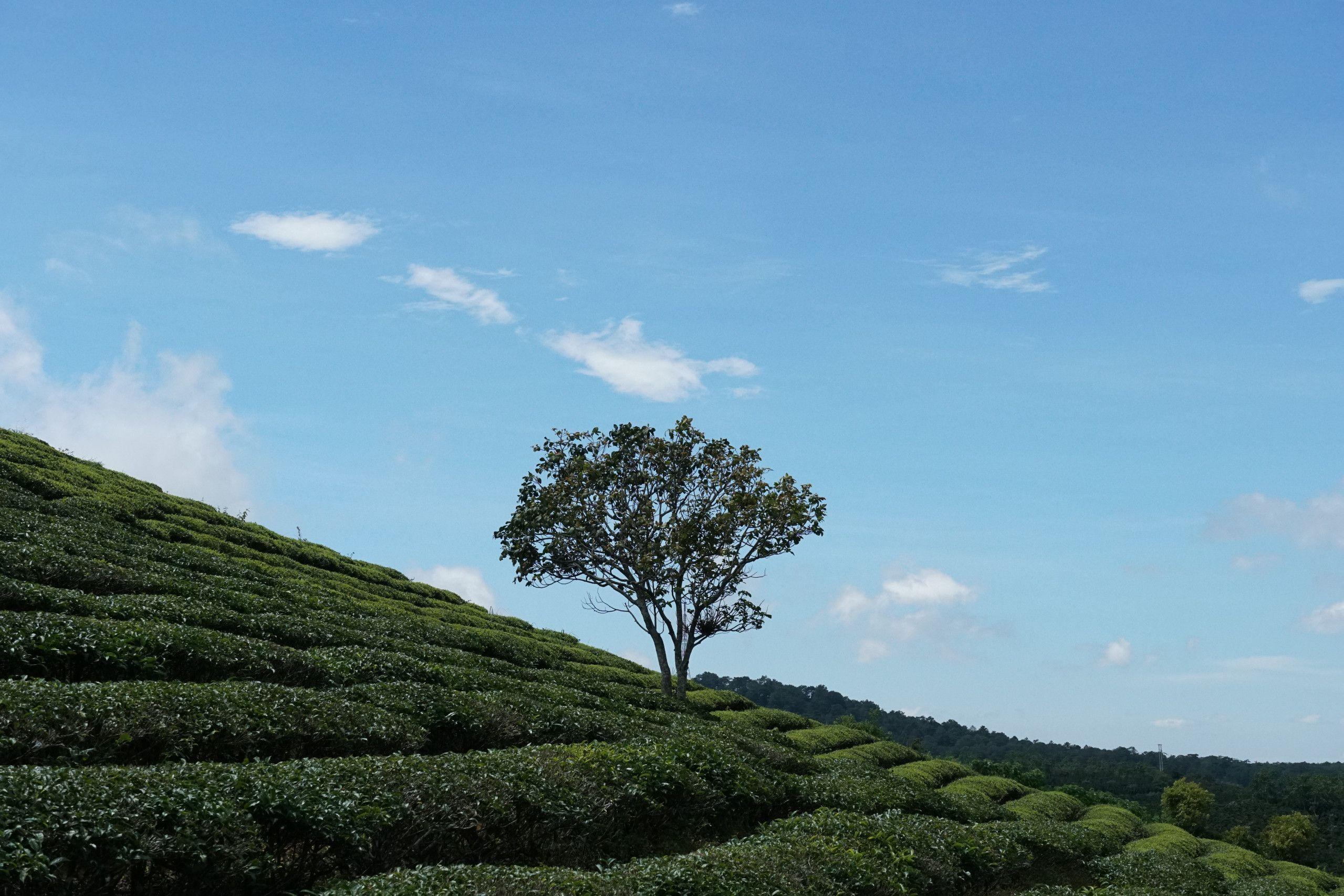 Ngọn đồi này tại xã Xuân Trường, thành phố Đà Lạt, tỉnh Lâm Đồng