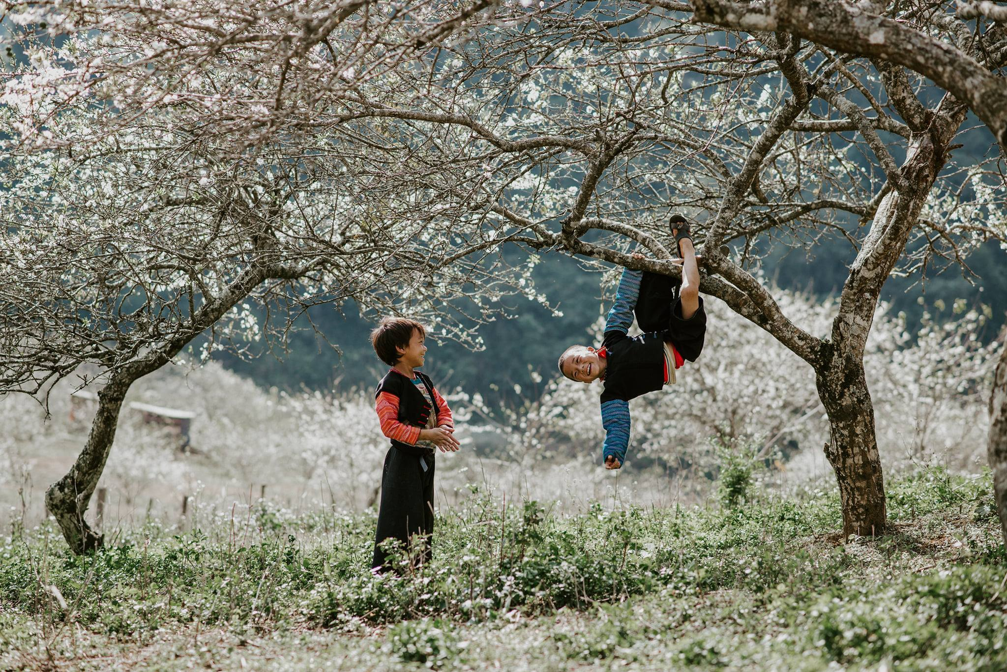Tháng 01, 02, 03 là mùa hoa đào, hoa mận, dâu tây đua nhau nở rộ