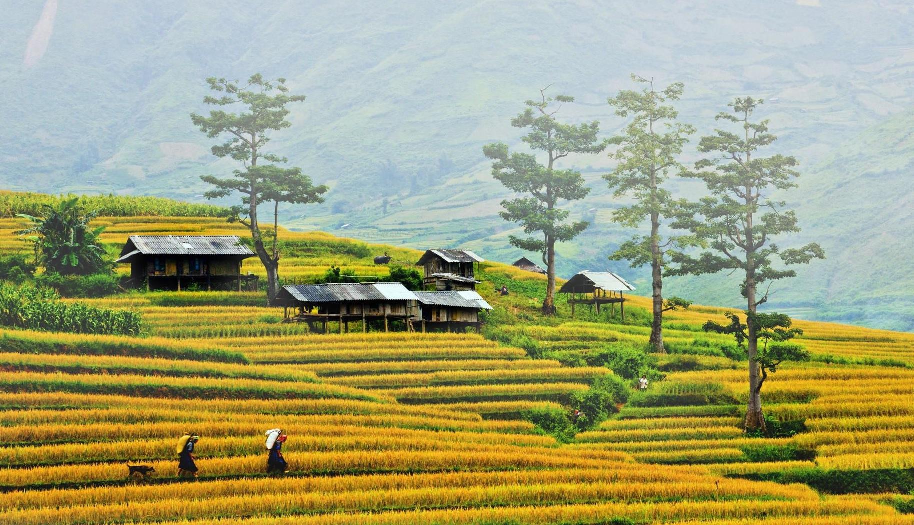 Du lịch Mộc Châu vào mùa đông sẽ được chiêm ngưỡng sắc trắng tinh khôi