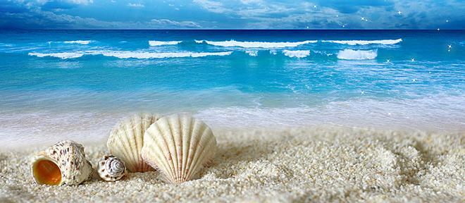 Vỏ sò ở Shell Beach